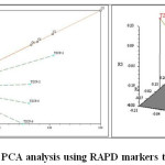 Figure 6: PCA analysis using RAPD markers technology