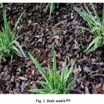 Fig. 1. Bark mulch [16]