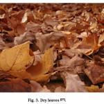 Fig. 3. Dry leaves [17].