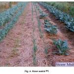 Fig. 4. Straw mulch [18].
